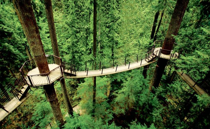 treetops-large-5
