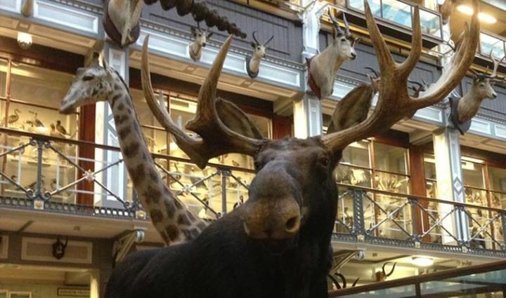 natural-history museum