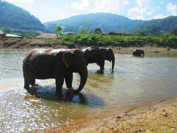 elephant-nature-park5