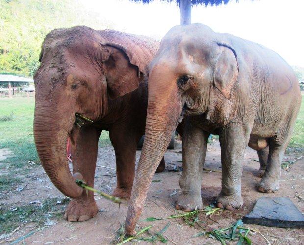 elephant-nature-park7