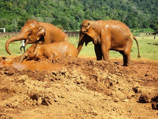 elephant-nature-park9