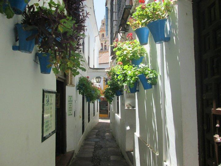 Calle Flores1